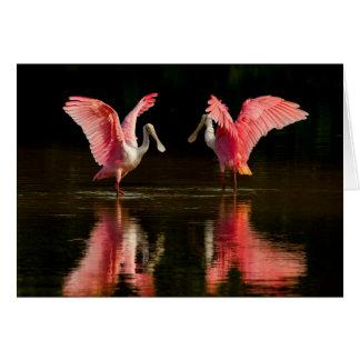 Cartão Dança de acoplamento do Spoonbill róseo