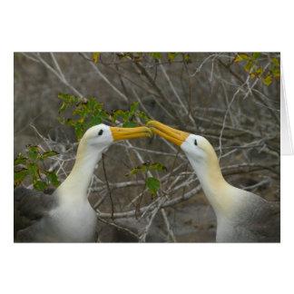 Cartão Dança elaborada do corte Waved Albatros,