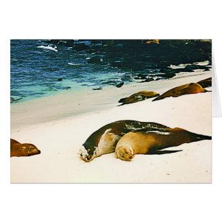 Cartão Dar dos leões de mar