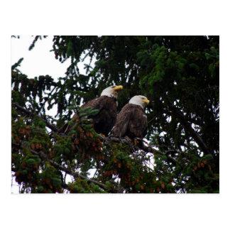 Cartão das águias americanas