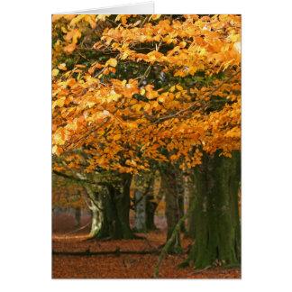 Cartão das árvores de faia de Autum