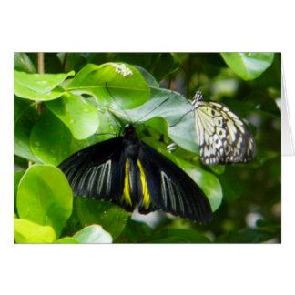 Cartão das borboletas