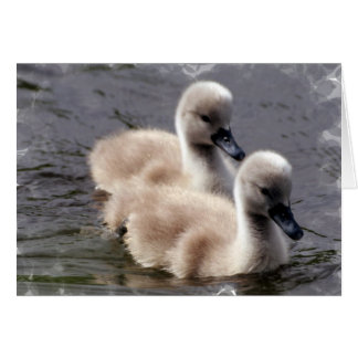 Cartão das cisnes do bebê
