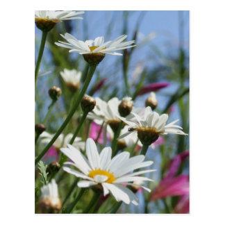 Cartão das flores