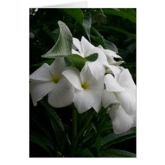 Cartão das flores brancas