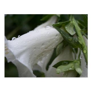 Cartão das flores brancas, Wintergarden de