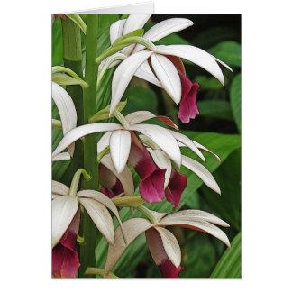 Cartão das flores da orquídea da freira