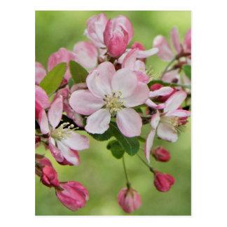Cartão das flores de Apple