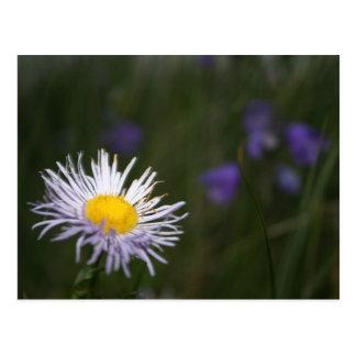 Cartão das flores selvagens de montanha rochosa de