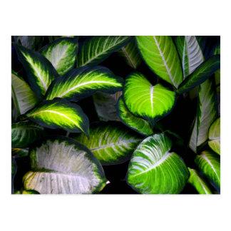 Cartão das folhas do branco e do verde