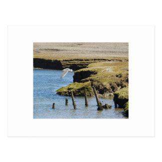 Cartão das gaivota em vôo