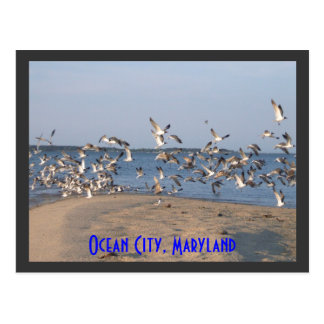 Cartão das gaivotas, cidade do oceano, Maryland