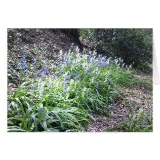 Cartão das madeiras do Bluebell com 3 fotos