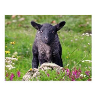 Cartão das ovelhas negras do Baa-Baa
