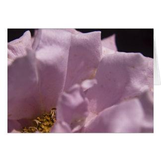 Cartão das pétalas cor-de-rosa de Lavendar