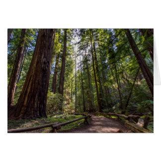 Cartão das sequóias vermelhas de Califórnia
