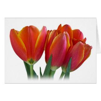 Cartão das tulipas