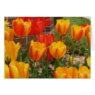 Cartão das tulipas do primavera