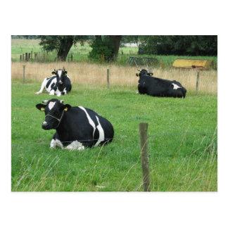 Cartão das vacas de leiteria