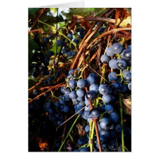 Cartão das vinhas de concórdia