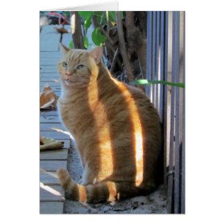 Cartão Daze ensolarado do gato gordo:)