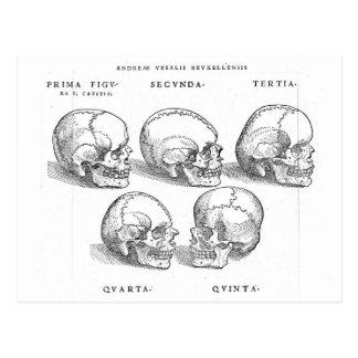 Cartão de 5 crânios