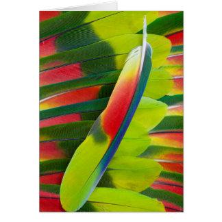 Cartão De Amazon do papagaio da pena vida ainda