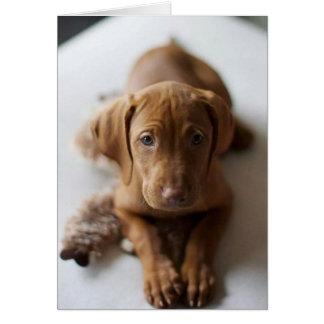 Cartão de aniversário adorável do cão de filhote