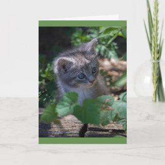 Cartão de aniversário adorável do gatinho