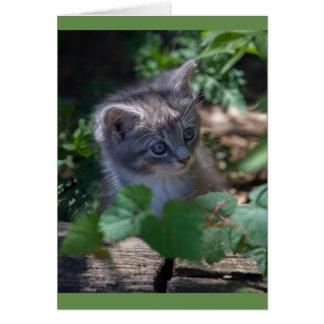 Cartão Cartão de aniversário adorável do gatinho
