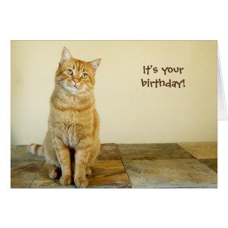 Cartão de aniversário alaranjado do gato malhado