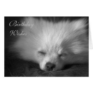 Cartão de aniversário aplanando de Pomeranian