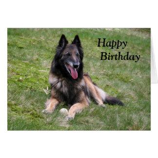 Cartão de aniversário belga da foto do cão de