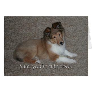 Cartão de aniversário bonito de Sheltie