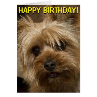 Cartão de aniversário bonito de Yorkie