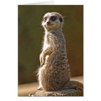 Cartão de aniversário c de Meerkat