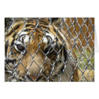 Cartão de aniversário cercado (h) do tigre