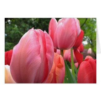 Cartão de aniversário cor-de-rosa das tulipas do