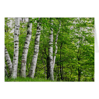 Cartão de aniversário da árvore de vidoeiro