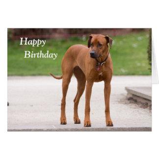 Cartão de aniversário da foto do cão de Rhodesian