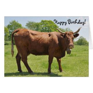 Cartão de aniversário da vaca de Salers