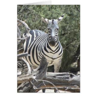cartão de aniversário da zebra da Armar-orelha
