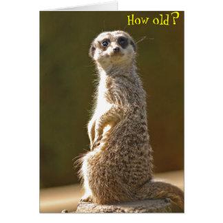 Cartão de aniversário de Meerkat - como velho?