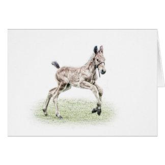 Cartão de aniversário do cavalo do potro da baía
