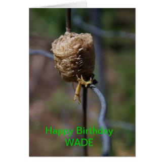 Cartão de aniversário do close up do ninho da