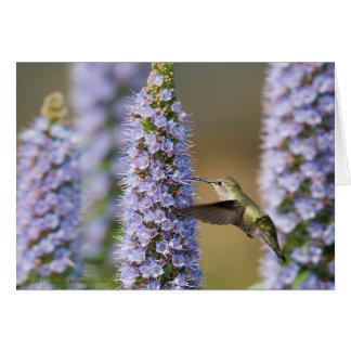 Cartão de aniversário do colibri