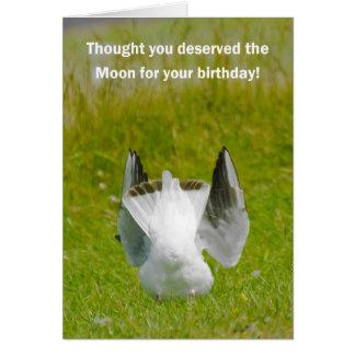 Cartão de aniversário do divertimento - gaivota