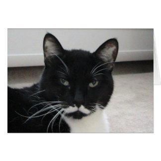 Cartão de aniversário do gato do smoking do humor