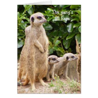 Cartão de aniversário do grupo de Meerkat