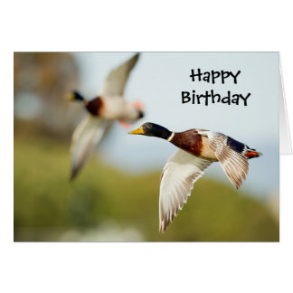 Cartão de aniversário do pato (ou alguma ocasião)